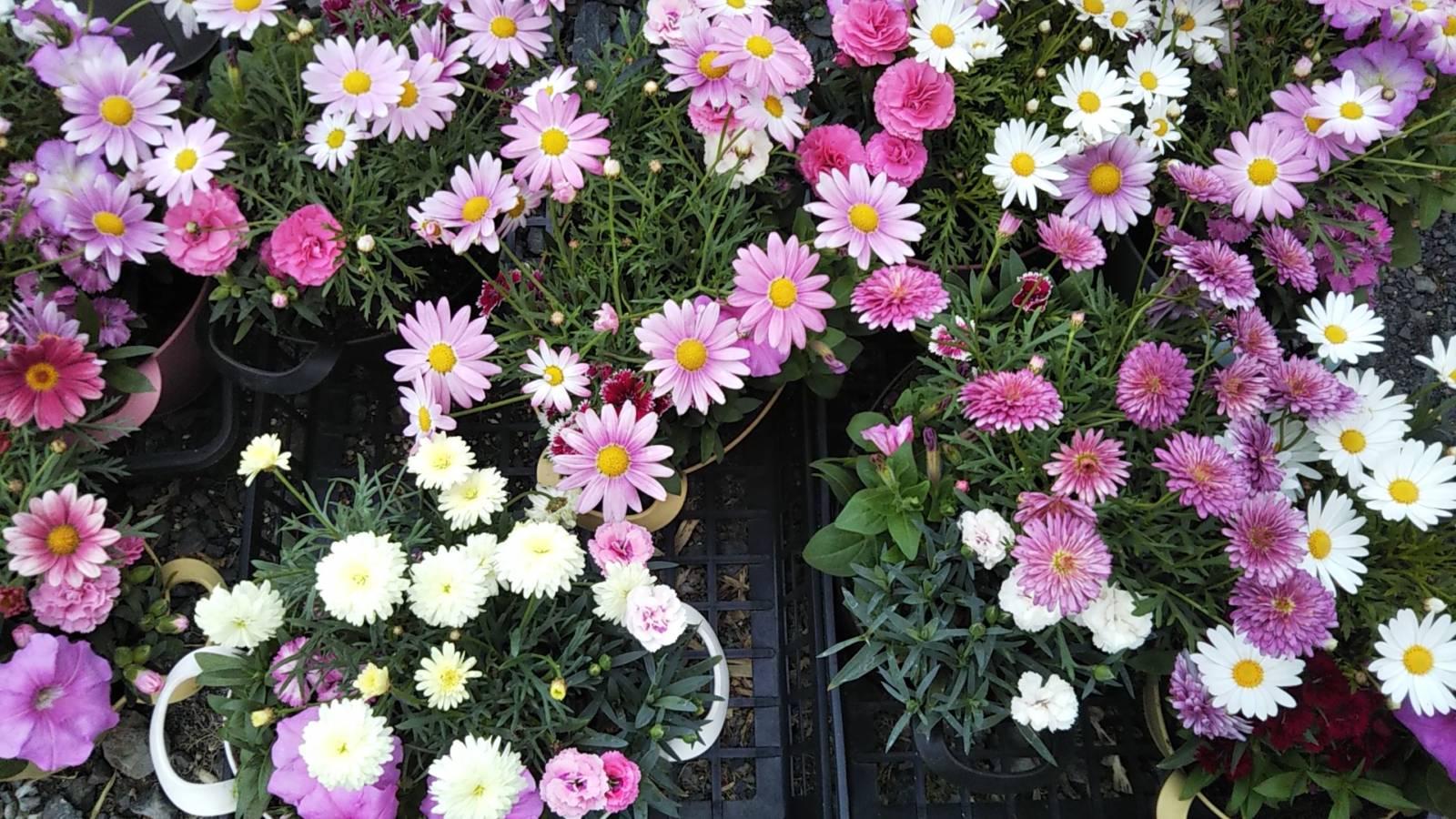 母の日お花プレゼントキャンペーン